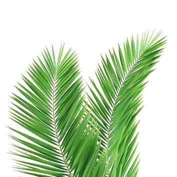 palm leaf art mesmerizing palm leaf art images best inspiration home