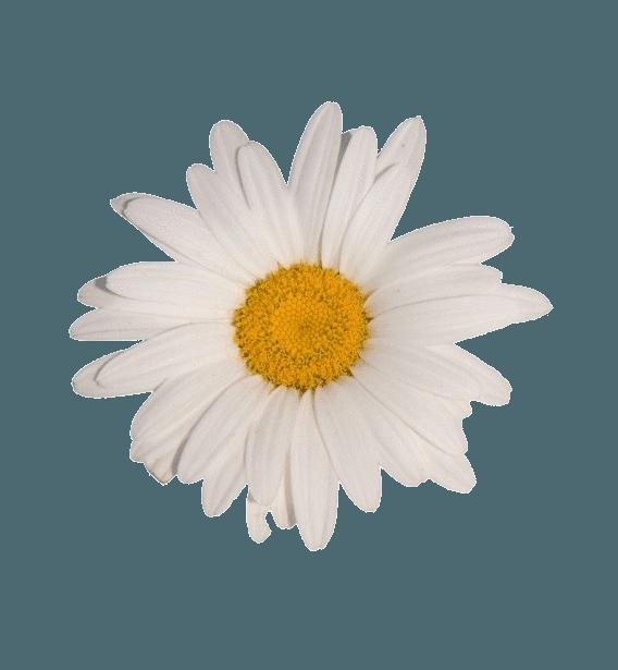 flower white tumblr aesthetic vaporwave...