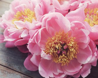 Large Pink Flowers Background
