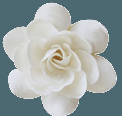 White Flower png