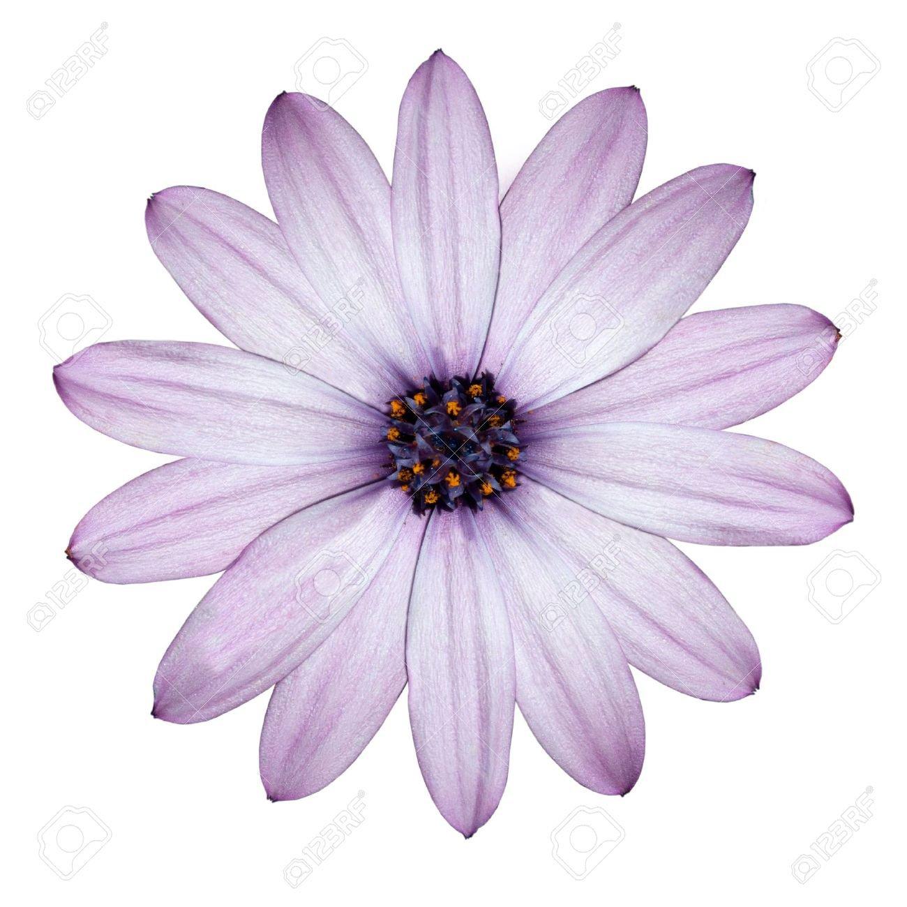 light purple flower - Google Search