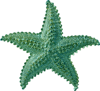 starfish - Google Search