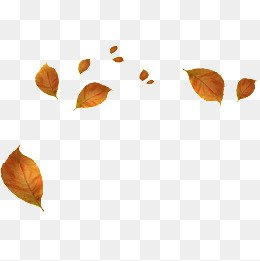 Autumn Leaves PNG Images | Vectors and PSD Files | Free Download on Pngtree