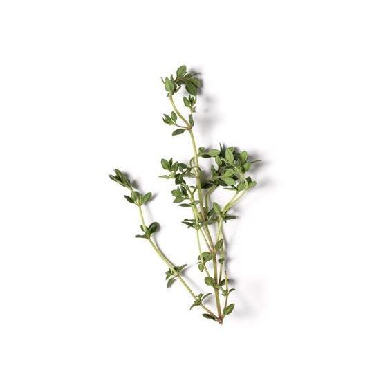 Thyme Plant Stem