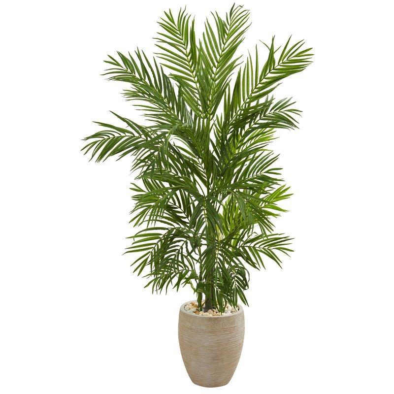 Bay Isle Home Areca Floor Palm Tree in Planter & Reviews | Wayfair