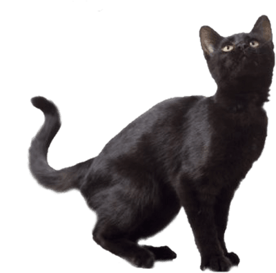 Google Image Result for http://www.pngmart.com/files/5/Black-Cat-PNG-Free-Download.png