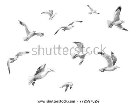 beach gulls flying water color - Google Search