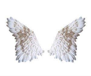 Wing png