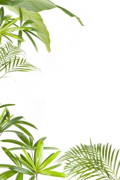 PLANTES/PLANT