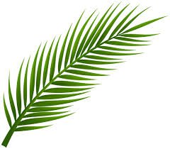 summer tree leaves clip art - Google Search