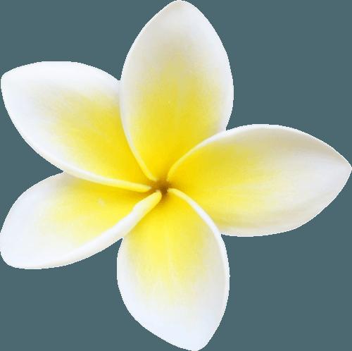 Plumeria Clipart (Icon Supplies)