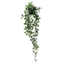 hanging plant - Google-Suche