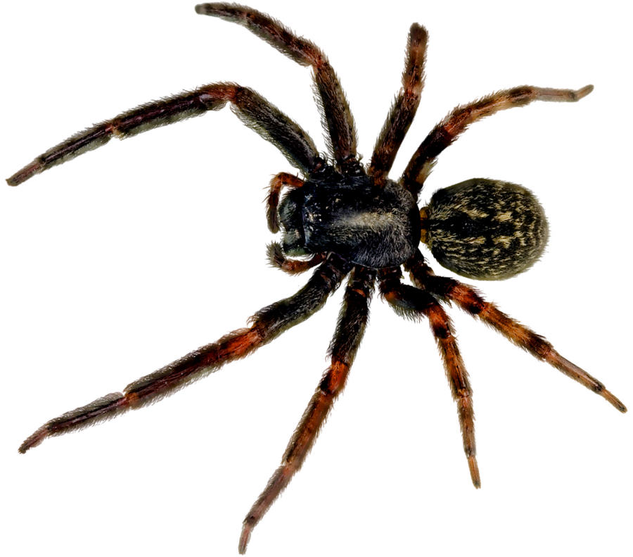 spider_PNG44.png (900×791)