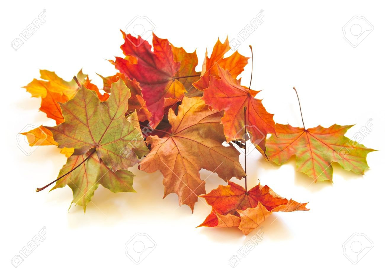 4900521-dry-colorful-autumn-leaves-on-white-background.jpg (1300×907)