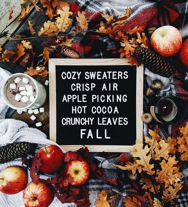 apple picking pinterest - Google Search