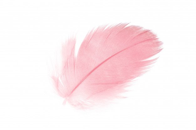 pink feather - Google Search