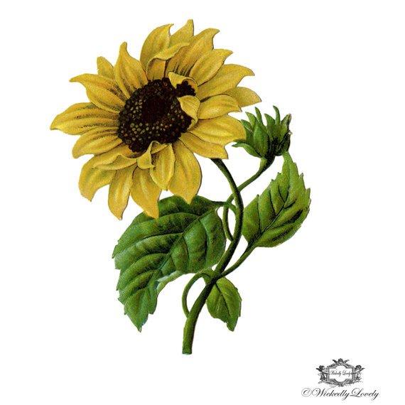 Sunflower temporary tattoo vintage sunflower tattoo Sun
