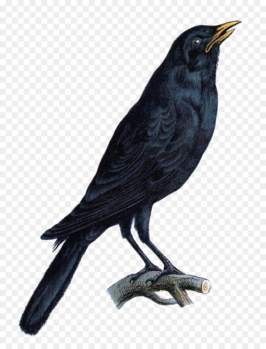 halloween raven - Google Search