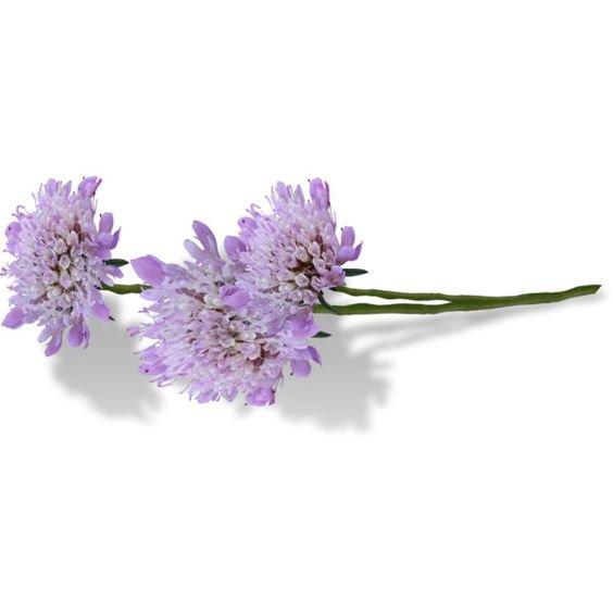 Purple Flowers Stem