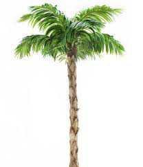 palm tree - Google Search