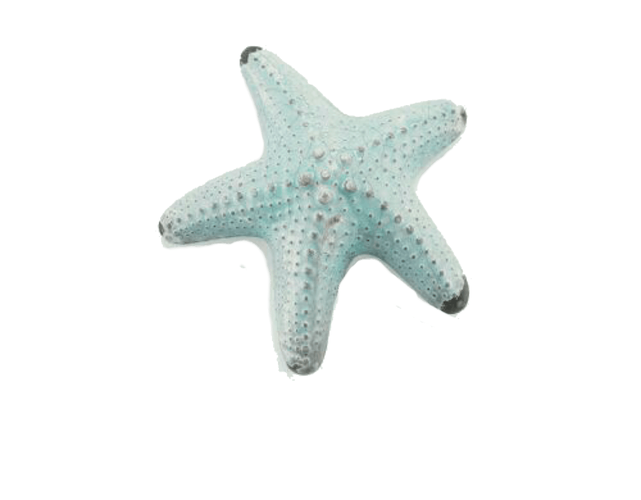 Pastel Blue Starfish png