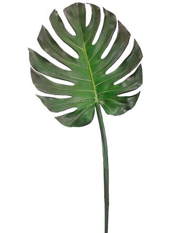 tropical single lime green stem - Google Search