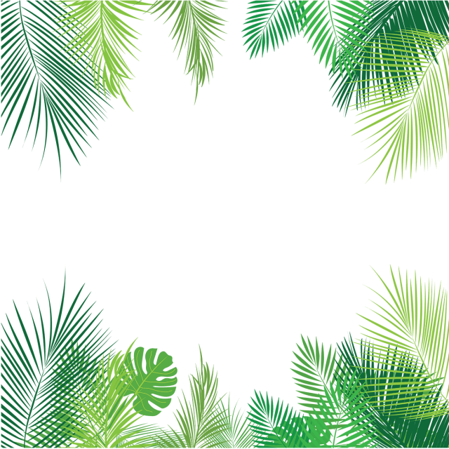 Tropical Palm Leaves PNG, Palm, Tropical Leaves, Leaves PNG and Vector for Free Download