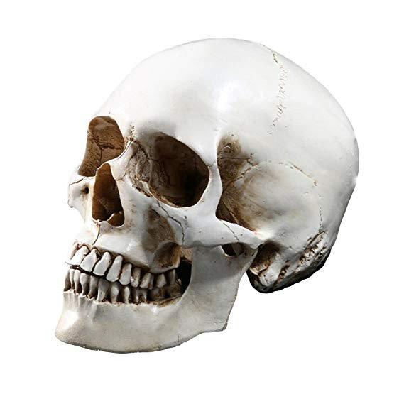 Tinksky Lifesize Human Skull Skeleton Model Replica Resin Medical Anatomical Tracing Medical Teaching Skeleton Halloween Decoration Statue: Amazon.co.uk: Kitchen & Home
