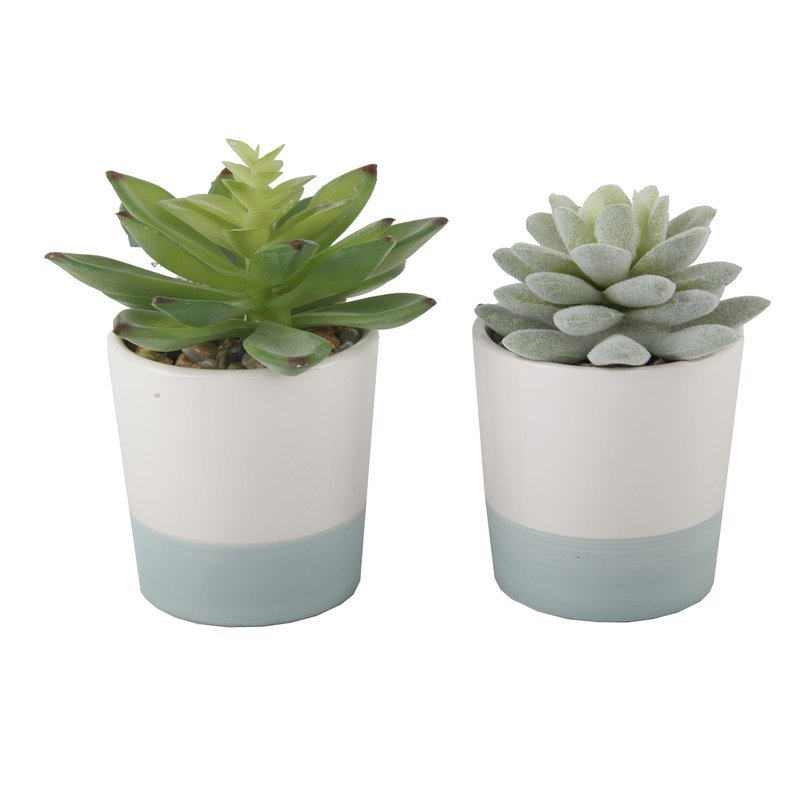 Wrought Studio 2 Piece Desktop Succulent Plant Set & Reviews | Wayfair