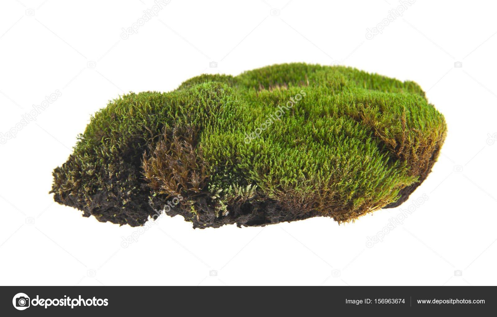 groene mos op witte achtergrond — Stockfoto © valzan #156963674