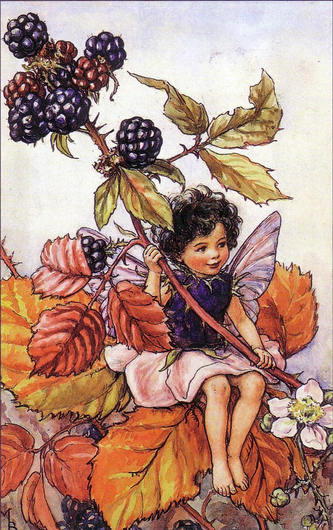 The Song Of The Blackberry Fairy, an autumn Flower Fairy poem by Cicely Mary Barker in Fairy Rings at lair2000
