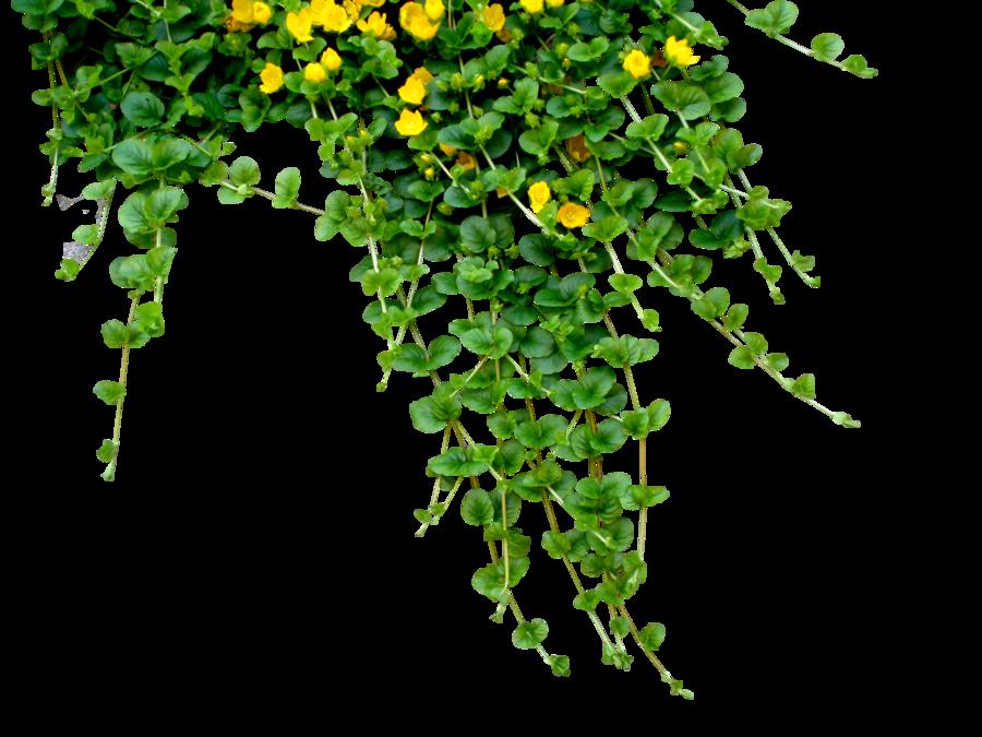 Flowers plants yellow