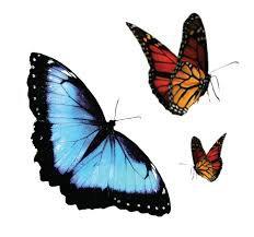 butterfly - Google-haku