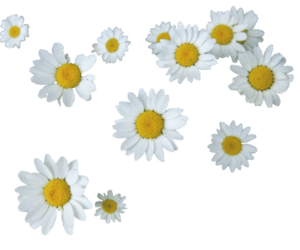 justdance | summer, transparent e png