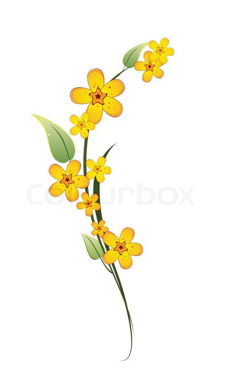 Yellow flower on a stem with green leaves on white background | Stock Vector | Colourbox