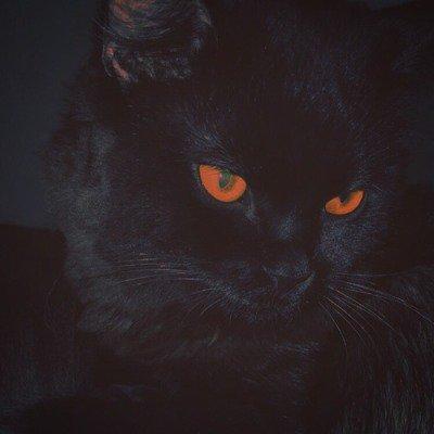 black cats aesthetic | Tumblr