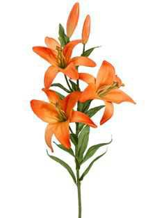 orange single flowers - Google Search