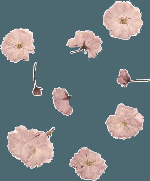 flower aesthetic niche vintage grunge freetoedit...
