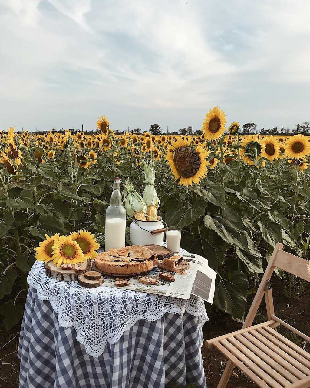Sunflower Picnic