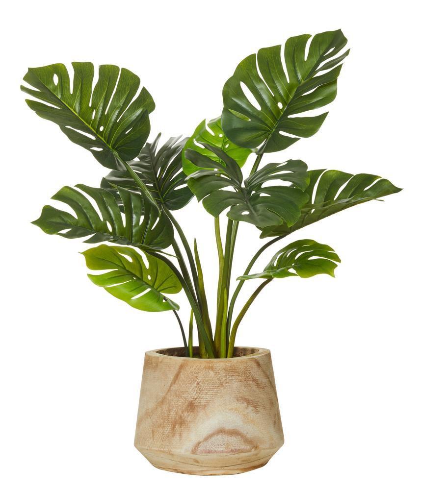 scandinavian plants - Google Search