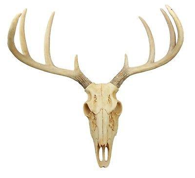 EXOTIC TROPHY Deer Skull Antler Decor for Home Wall Mount Buck Head Decoration | eBay