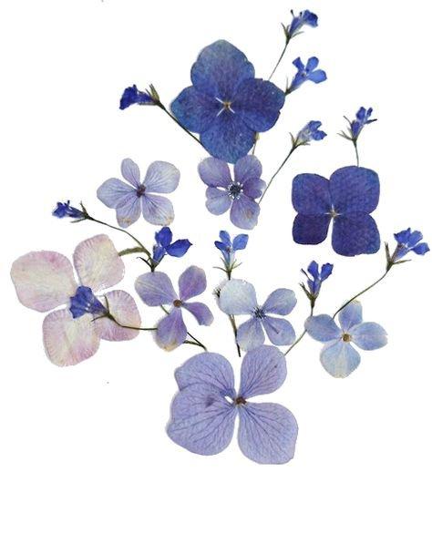 blue flower png filler aesthetic garden