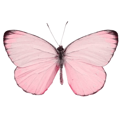Pink Butterfly png