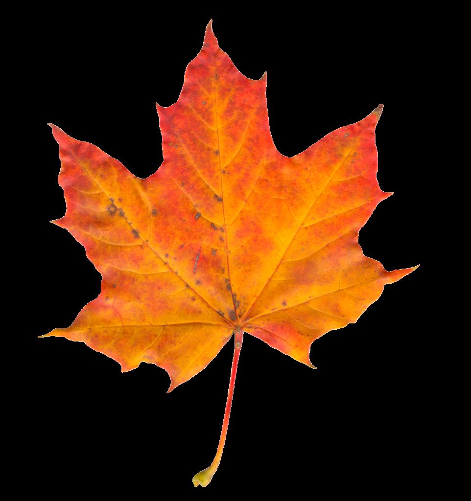 Autumn Leaf Clipart (Icon Supplies)