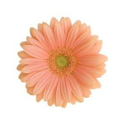Peach Flowers - Wholesale Wedding Flowers – BloomsByTheBox.com