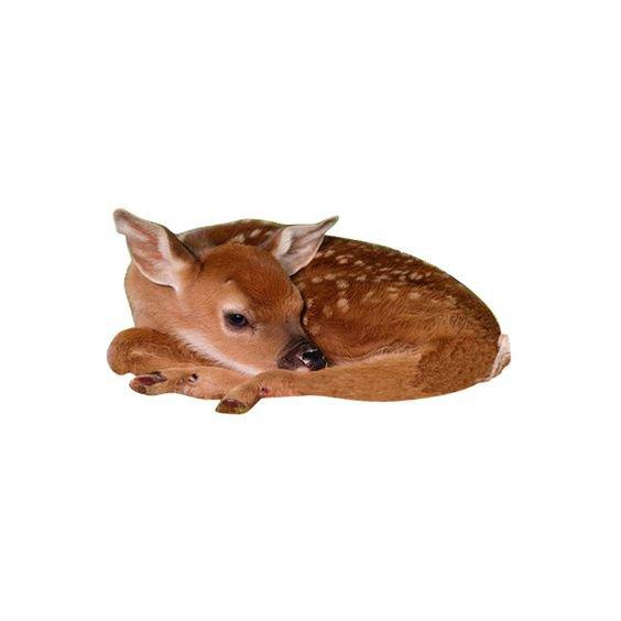 deer png filler animal brown