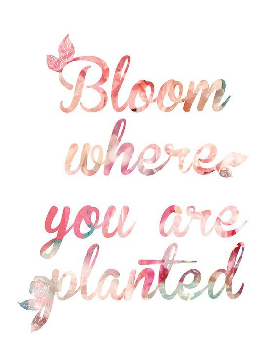 DOWNLOAD Bloom Where You Are Planted Coral Art Print | Etsy
