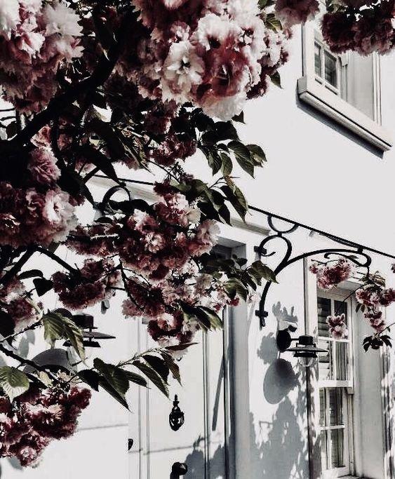 aesthetic flower house