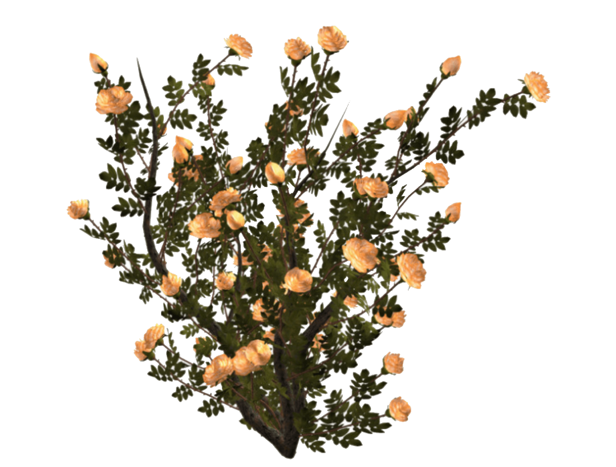 plant / polyvore | polyvore pngs in 2018 | Pinterest | Polyvore, Mood boards and Mood