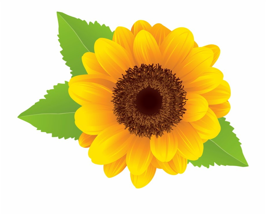 Sunflower Png Clip Art Image Free PNG Images & Clipart Download #2119550 - Sccpre.Cat